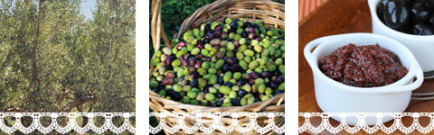 Kalamata olives - Olive paste - Pylos Poems
