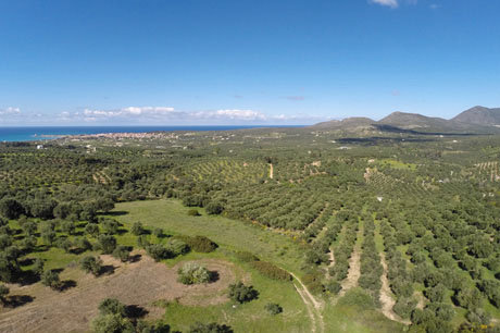Olive Grove - Why Pylos Poems